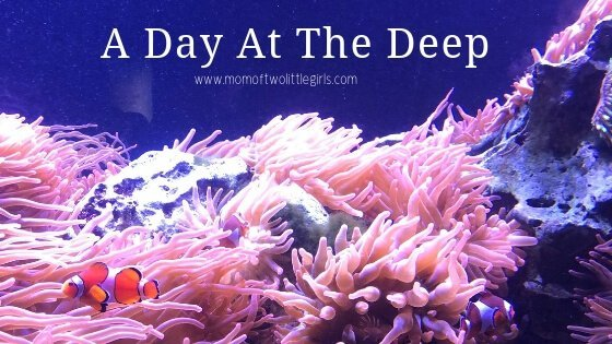 a-day-at-the-deep