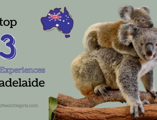 The Top 3 Animal Experiences Near Adelaide
